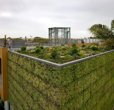 g1 Green Roof
